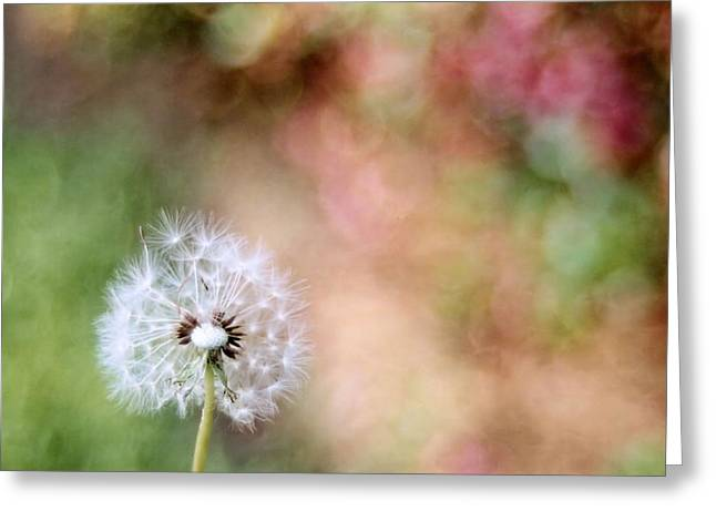 Greeting Card featuring the photograph Blown Away by Lynnette Johns