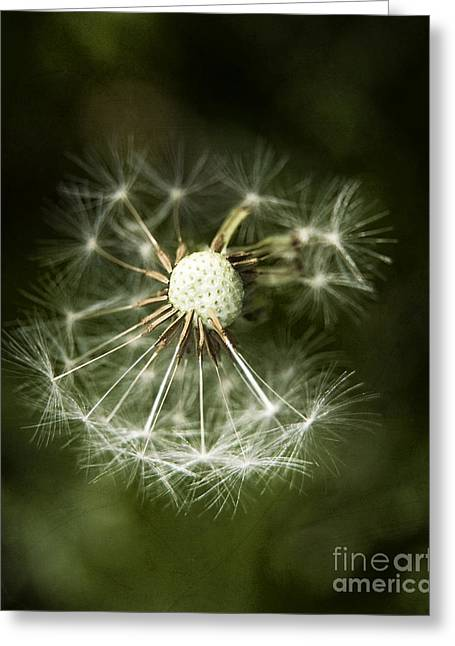 Blown Dandelion Greeting Card by Agnieszka Kubica
