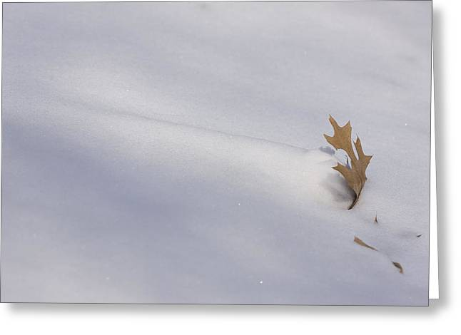 Blown Snow And Oak Leaf Greeting Card