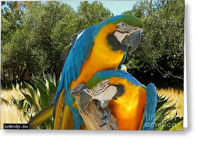 Blue And Gold Macaws Greeting Card by Methune Hively