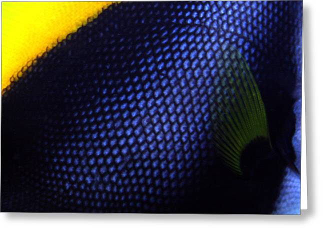 Blue And Yellow Scales Greeting Card