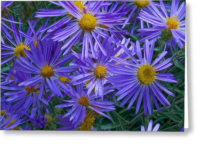 Blue Asters Greeting Card