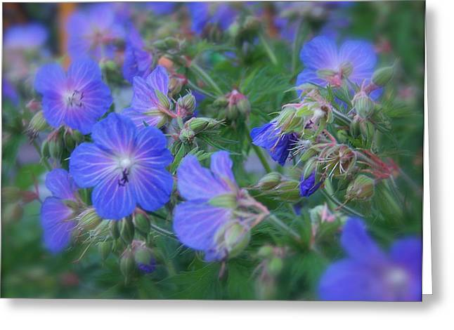 Greeting Card featuring the photograph Blue Beauties by Robin Regan