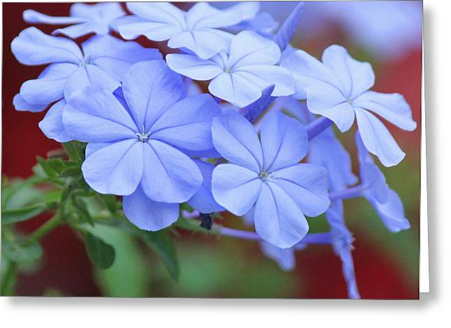 Blue Beauty Greeting Card by Becky Lodes