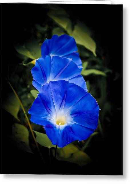 Blue Beauty Greeting Card by Swift Family