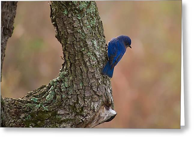 Blue Bird 2 Greeting Card by Dan Wells