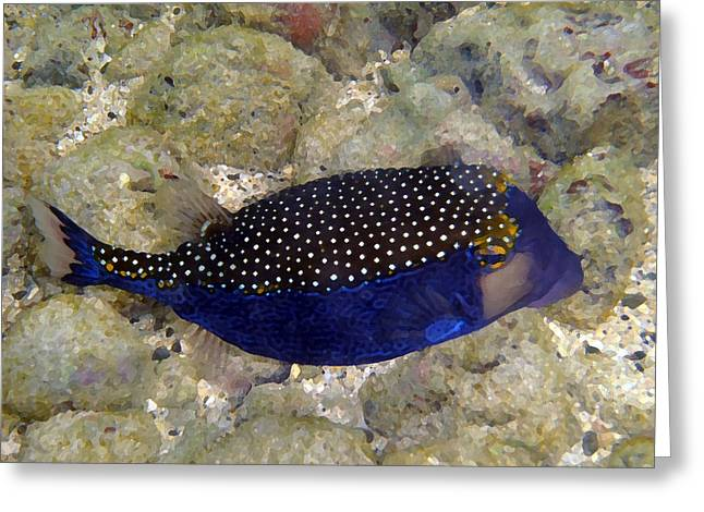 Blue Box Puffer Fish Greeting Card by Tony and Kristi Middleton