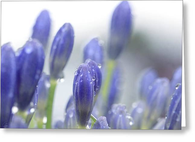 Blue Buds Greeting Card