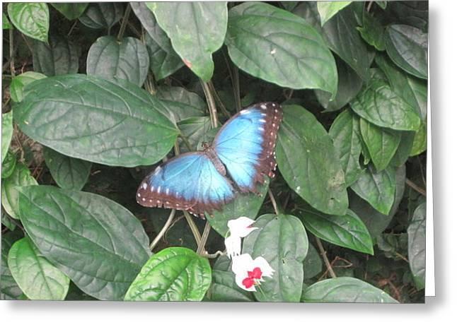 Greeting Card featuring the photograph Blue Butterfly by Karen Molenaar Terrell