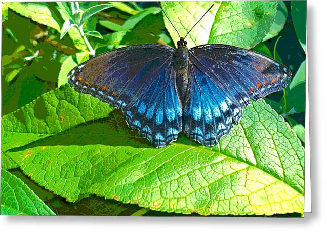 Blue Butterfly On Foliage Greeting Card by Padre Art
