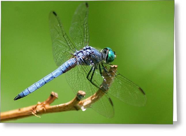 Blue Dragonfly Start Up Greeting Card by Meeli Sonn