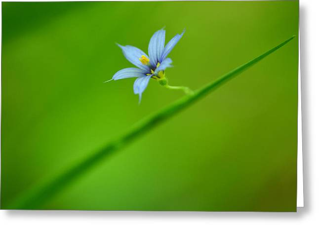 Greeting Card featuring the photograph Blue-eyed Grass by JD Grimes