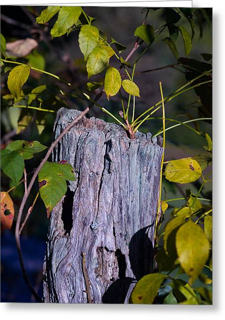 Blue Fence Post 1 Greeting Card