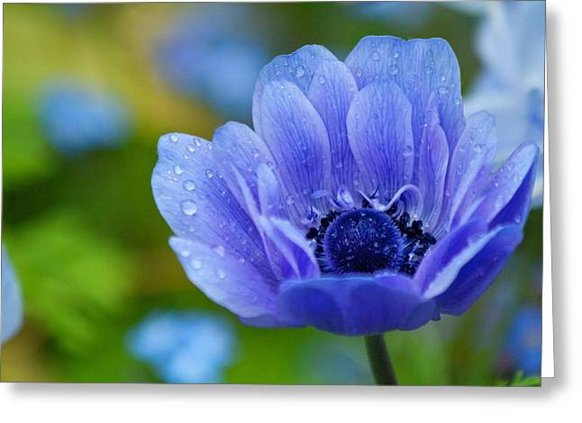 Blue Flower Greeting Card by Scott Holmes
