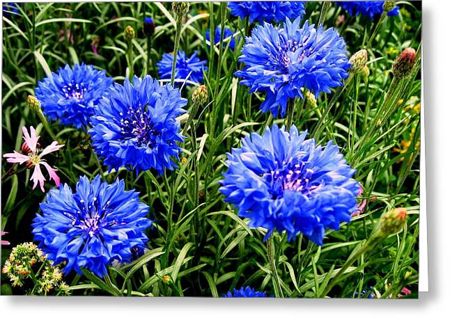 Blue Flowers Greeting Card by Luis and Paula Lopez