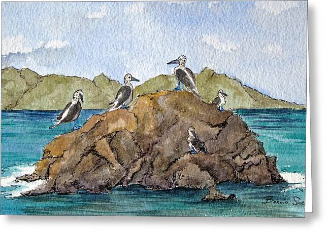 Blue Footed Boobies In Galapagos Greeting Card by Bonnie Sue Schwartz
