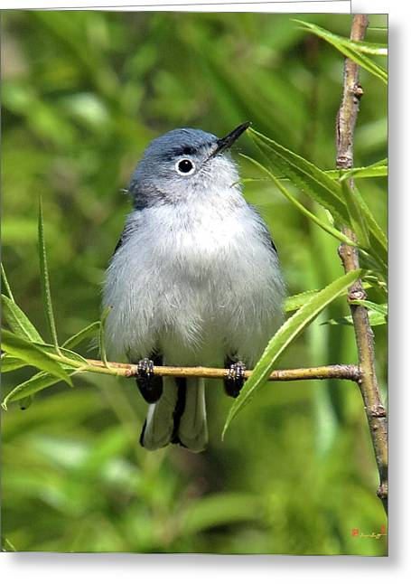 Greeting Card featuring the photograph Blue-gray Gnatcatcher Dsb147 by Gerry Gantt