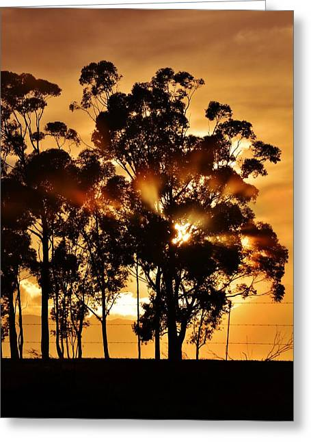 Blue Gum Trees Greeting Card