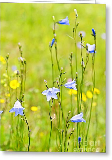 Blue Harebells Wildflowers Greeting Card by Elena Elisseeva