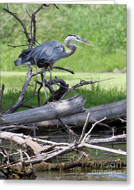 Blue Heron At The Lake Greeting Card
