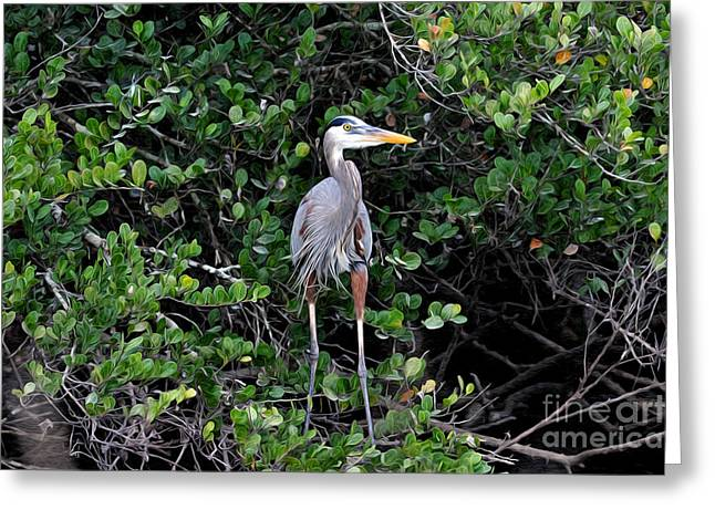 Greeting Card featuring the photograph Blue Heron In Tree by Dan Friend