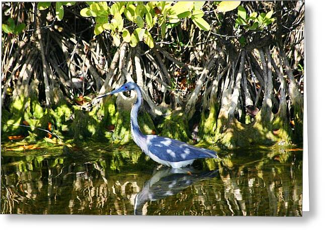 Greeting Card featuring the photograph Blue Heron by Jeanne Andrews