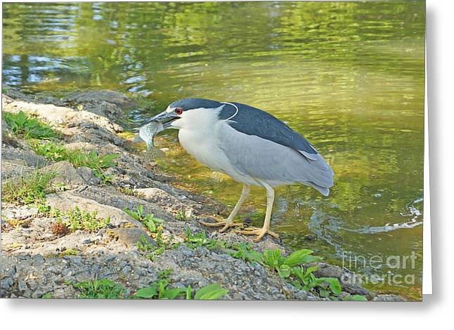 Blue Heron With Fish Greeting Card