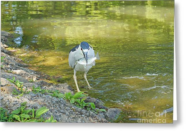 Blue Heron With Fish One Greeting Card