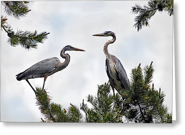 Blue Herons Greeting Card