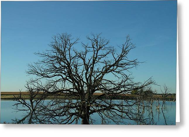 Blue Hue Dead Tree Greeting Card