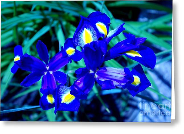 Greeting Card featuring the photograph Blue Iris by AmaS Art