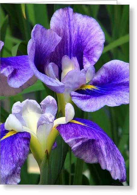 Blue Irises Greeting Card by Deborah  Crew-Johnson