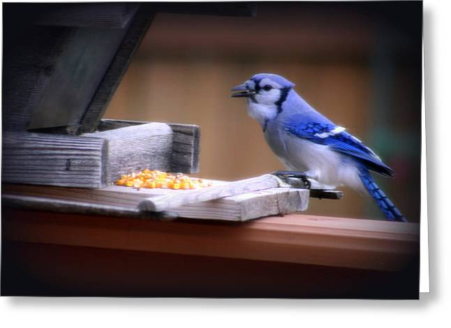 Greeting Card featuring the photograph Blue Jay On Backyard Feeder by Kay Novy