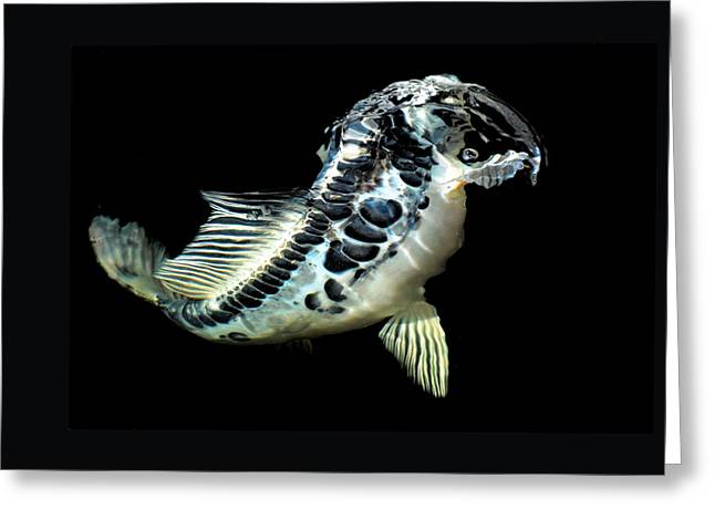 Blue Koi Rising Greeting Card