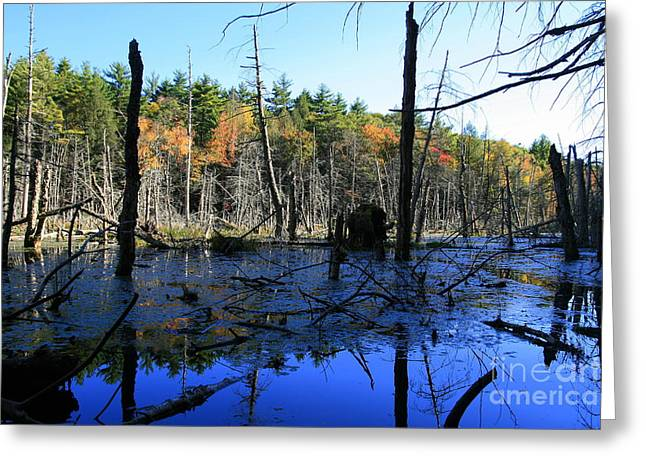 Blue Marsh Reflections Greeting Card