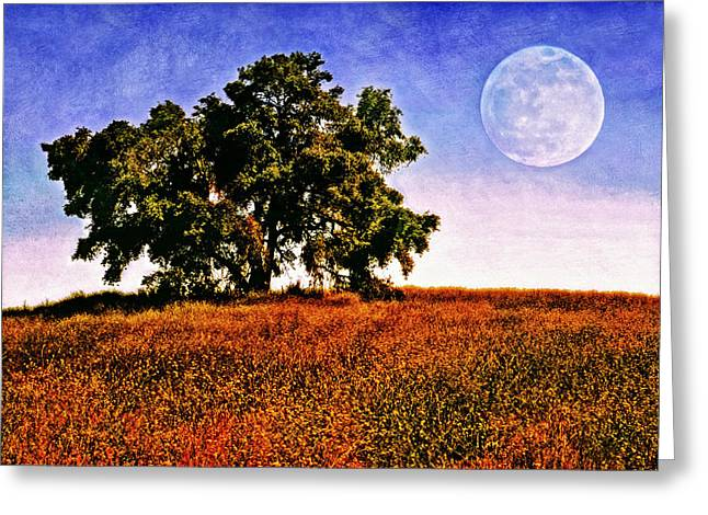 Blue Moon Morning Greeting Card by Donna Pagakis