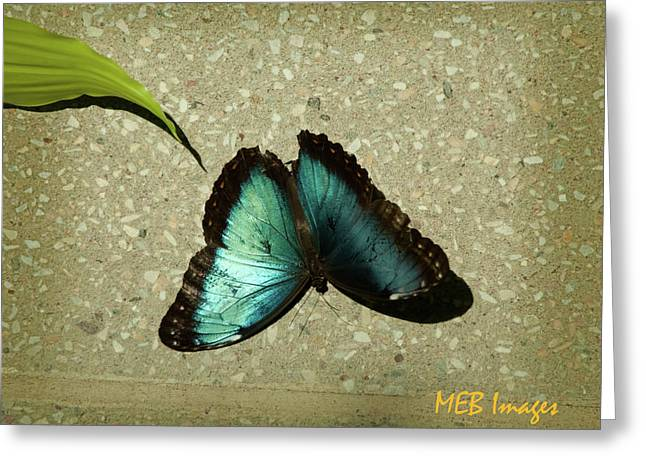 Blue Morpho 1 Greeting Card