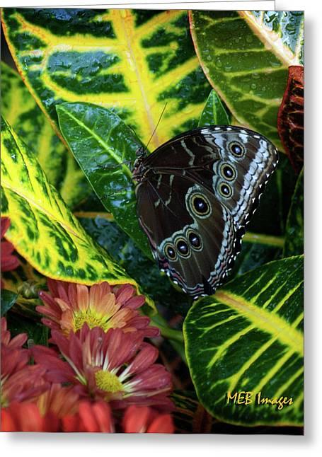 Blue Morpho Butterfly Greeting Card by Margaret Buchanan