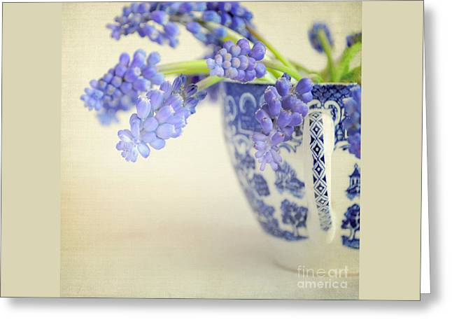 Blue Muscari Flowers In Blue And White China Cup Greeting Card