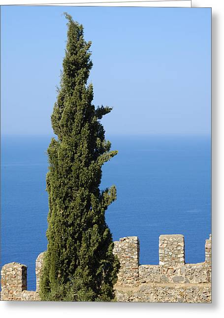 Blue Ocean And Sky Green Tree - Serene And Calming  Greeting Card by Matthias Hauser