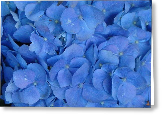 Blue On Blue Greeting Card by Val Oconnor