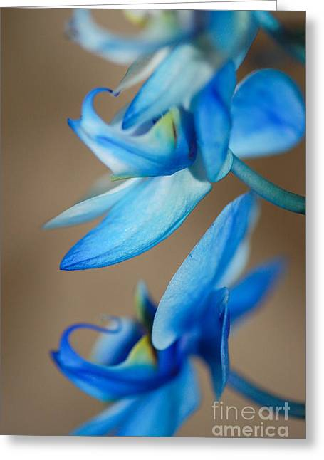 Blue Orchid  Greeting Card by Melissa Haley