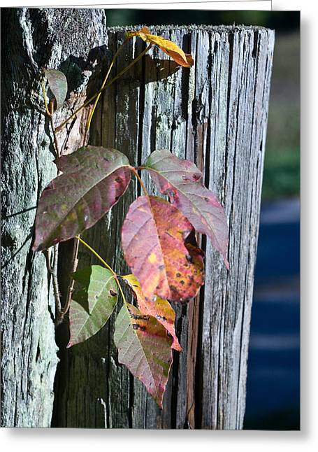 Blue Posts And Poison Ivy Greeting Card
