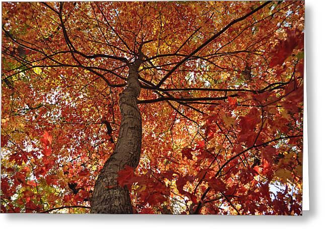 Blue Ridge Autumn Leaves 1.3 Greeting Card
