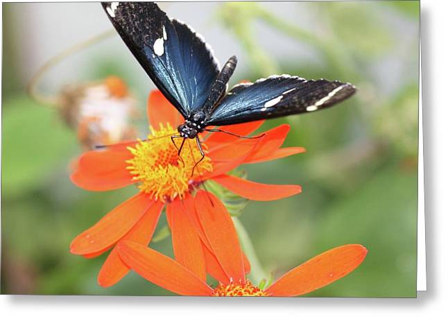 Blue Sara On Orange Sunflower Greeting Card by Andrea  OConnell