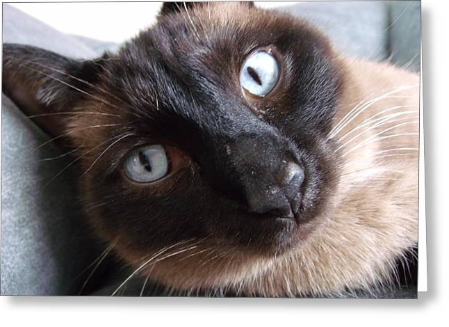 Blue Siamese Eyes Greeting Card