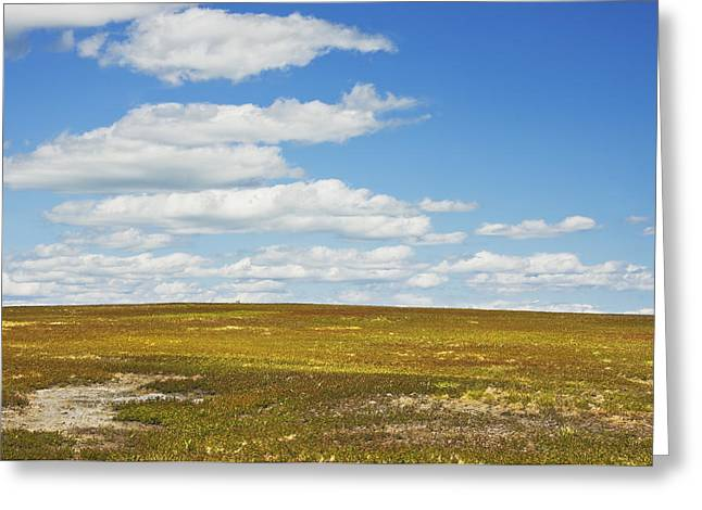 Blue Sky And Clouds Over Blueberry Farm Field Maine Greeting Card