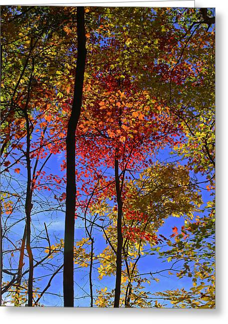 Blue Sky Autumn Greeting Card