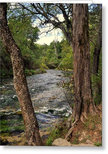 Greeting Card featuring the photograph Blue Spring Branch by Marty Koch