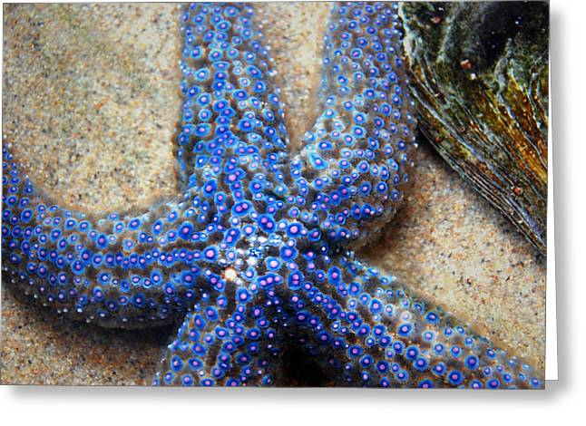 Blue Starfish Greeting Card
